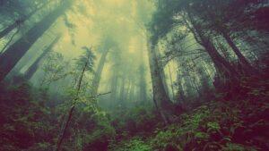 Leśniczy