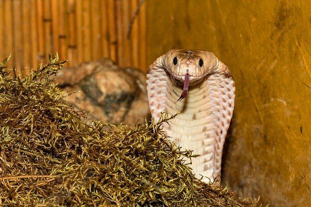 Doiciel węży