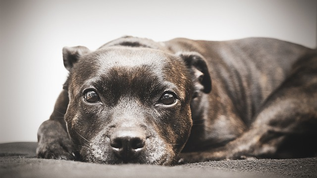 Behawiorysta psów