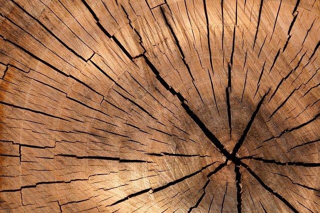 Technolog drewna